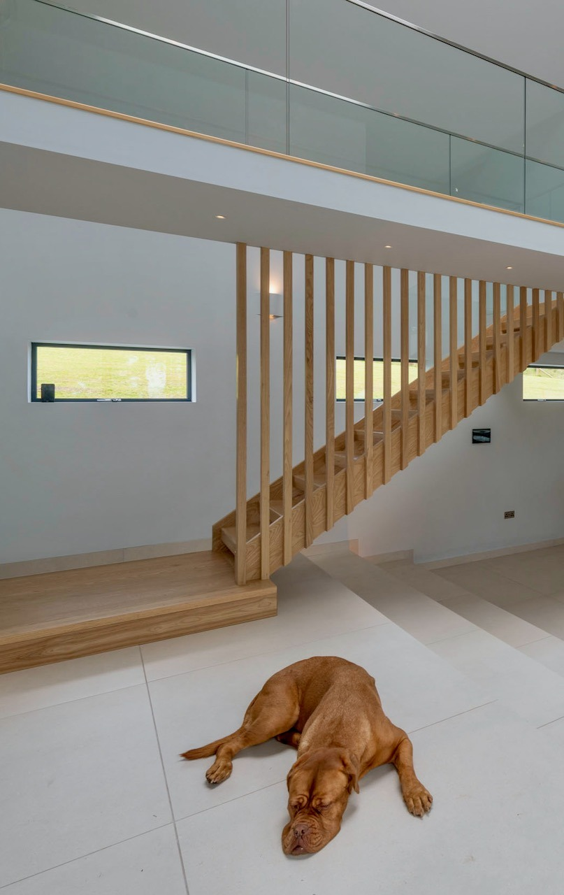 Dog in foreground of staircase